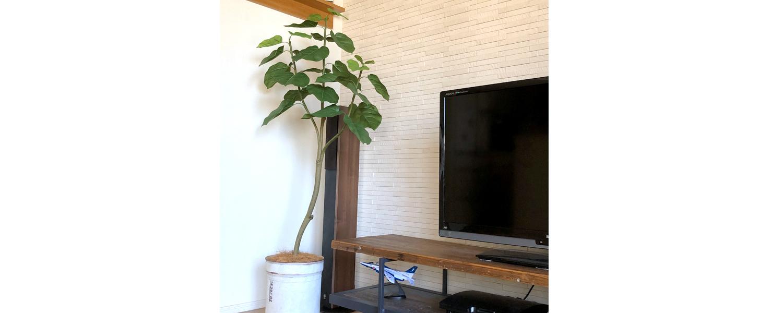 フェイクグリーン 雰囲気 スラッとした植物