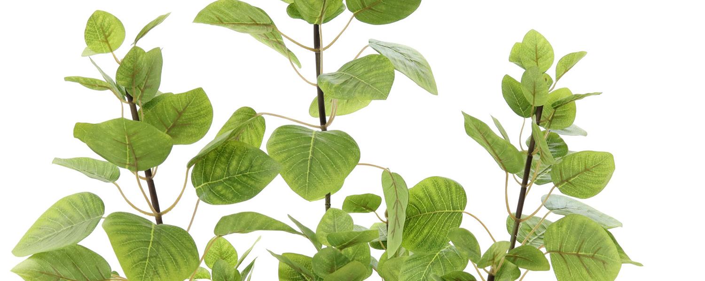 フェイクグリーン スモークツリー